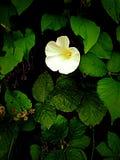 Fiore circondato dai leavs Immagine Stock Libera da Diritti