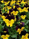 Fiore Colourful fotografie stock libere da diritti