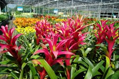 Fiore Colourful Fotografie Stock