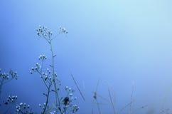 Fiore con fondo blu Fotografia Stock Libera da Diritti