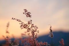 Fiore con fondo crepuscolare fotografie stock