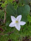 Fiore con fondo verde Fotografie Stock