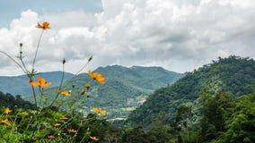 Fiore con il fondo della nuvola e della montagna stock footage