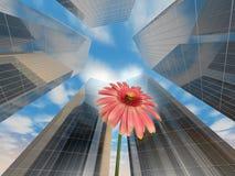 Fiore con il palazzo Fotografie Stock Libere da Diritti