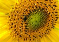 Fiore con il piccolo insetto immagini stock libere da diritti
