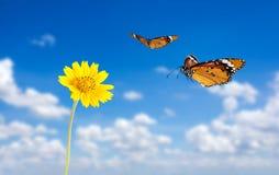 Fiore con la farfalla Fotografie Stock Libere da Diritti