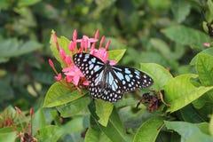 Fiore con la farfalla Fotografia Stock