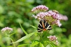 Fiore con la farfalla e l'ape Fotografia Stock Libera da Diritti