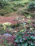 Fiore con la foglia di acero rossa Fotografie Stock