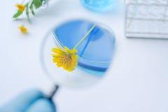 Fiore con la vetreria per laboratorio con i liquidi blu fotografia stock