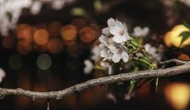 Fiore con la vista di notte Fotografie Stock Libere da Diritti
