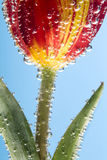Fiore con le bolle di aria Fotografia Stock Libera da Diritti