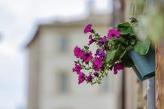 Fiore con le case vaghe Immagini Stock