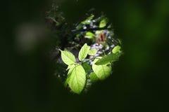 Fiore con permesso Per fondo Chiuda sulla foto reparto del fi Fotografie Stock Libere da Diritti