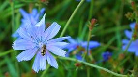 Fiore con un'ape fotografia stock libera da diritti