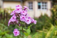 Fiore con una casa di campagna nei precedenti Fotografia Stock