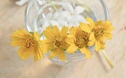 Fiore con vetro Fotografie Stock