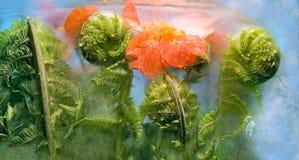 Fiore congelato del bennet e della felce Fotografie Stock Libere da Diritti