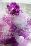 Fiore congelato del gladiolo Immagini Stock Libere da Diritti