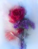 Fiore congelato della rosa rossa Fotografia Stock Libera da Diritti