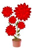Fiore conservato in vaso Fotografia Stock Libera da Diritti
