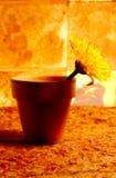 Fiore conservato in vaso astratto fotografie stock