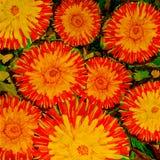 Fiore contro i fogli Disegno del colore di acqua Fotografie Stock Libere da Diritti