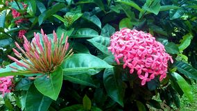 Fiore contro perfetto del fiore Fotografia Stock