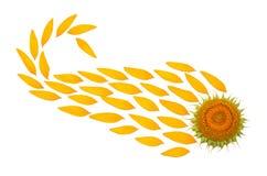 Fiore creativo di idea di un nucleo e dei petali del girasole fotografia stock libera da diritti