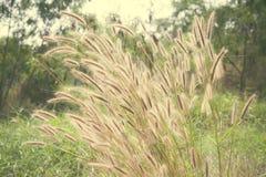 Fiore d'annata dell'erbaccia di colore Fotografie Stock Libere da Diritti