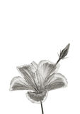 Fiore d'argento Fotografia Stock Libera da Diritti