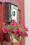 Fiore d'attaccatura della petunia Fotografie Stock Libere da Diritti
