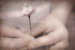 Fiore da un bambino Immagini Stock Libere da Diritti