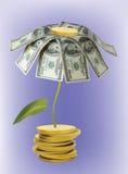 Fiore dai dollari Immagini Stock