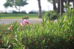 Fiore dalla strada fotografie stock