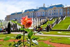 Fiore davanti al palazzo di Peterhof immagine stock