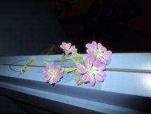 Fiore davanti allo specchio immagini stock libere da diritti