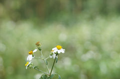 Fiore dei bottoni di cappotto Fotografia Stock Libera da Diritti