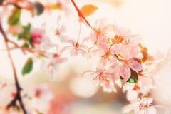 Fiore dei fiori bianchi in primavera Priorità bassa della natura fotografia stock libera da diritti
