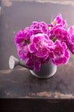 Fiore dei garofani Fotografie Stock Libere da Diritti