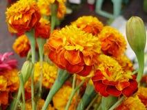 Fiore dei morti Immagini Stock