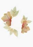 Fiore dei raggi X fotografia stock