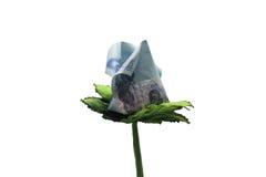 Fiore dei soldi Fotografie Stock