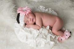 Fiore del bambino Fotografia Stock