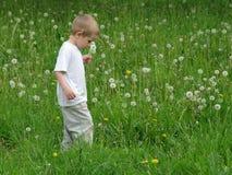 fiore del bambino Fotografia Stock Libera da Diritti