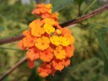 fiore del beautiul Immagini Stock Libere da Diritti