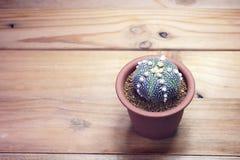 Fiore del cactus sulla vista superiore del fondo Fotografia Stock Libera da Diritti