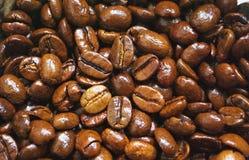Fiore del caffè Fotografia Stock