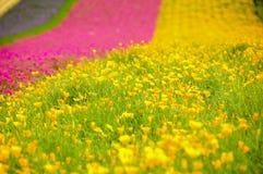 fiore del campo Fotografia Stock