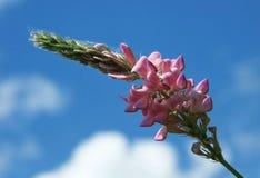 Fiore del campo ed il cielo immagini stock libere da diritti